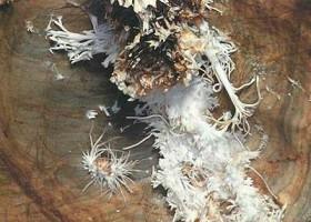 ochtinska-aragonite-cave.jpg