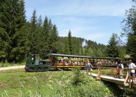 historical-logging-back-swath-railway.jpg